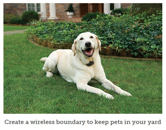 PetSafe dog wireless boundary