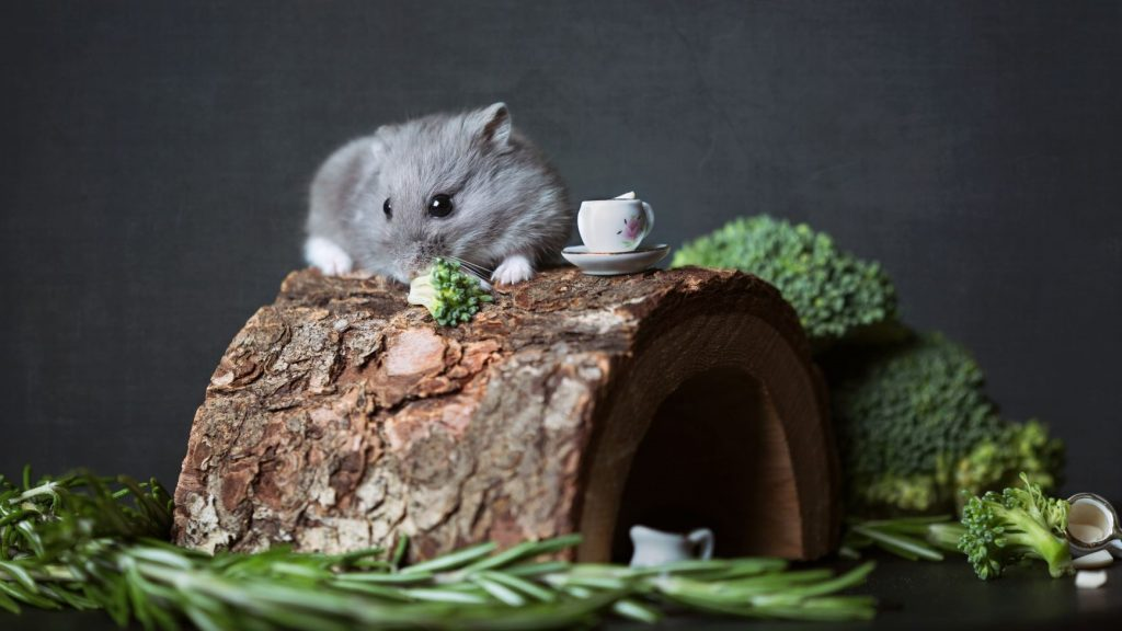 mouse in a log house