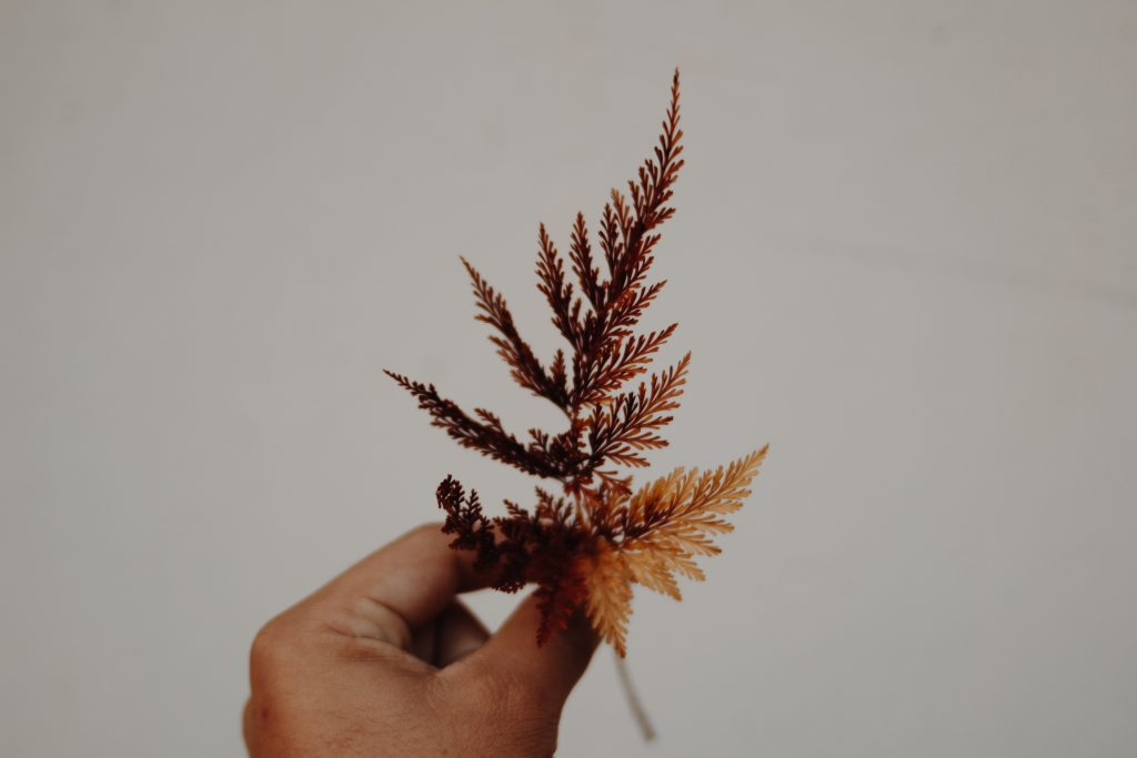 hand holding a dried brown leaf
