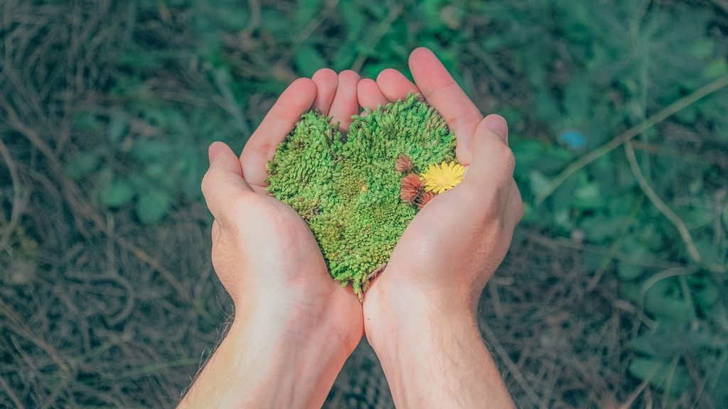hands holding green moss in the shape of a heart